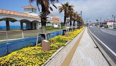 海岸沿いのきれいな黄色いお花