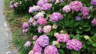 千葉県民の日(^^♪と6月のお花