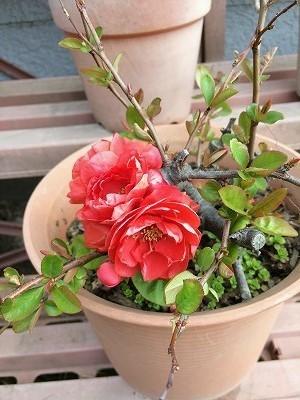 お花とイチゴケーキ-もうすぐ4月の館山