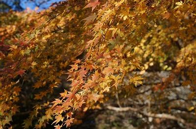 館山の紅葉-小松寺
