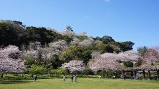 城山公園の桜-2015年