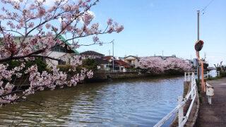 2014年のさくら咲く館山