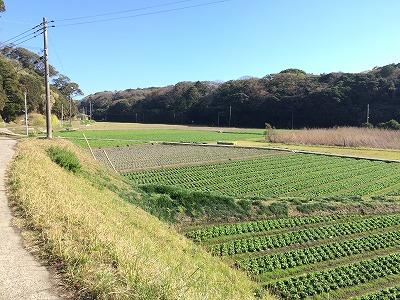 館山の風景-佐野