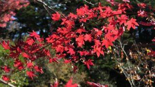 館山にも紅葉のきれいなところがあった!-小松寺