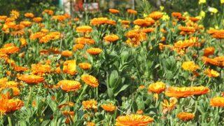 お花、ローズマリー公園など